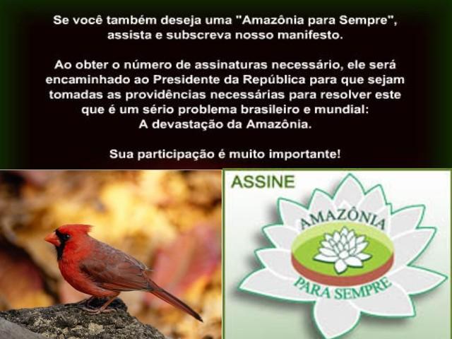 amazonia22.JPG